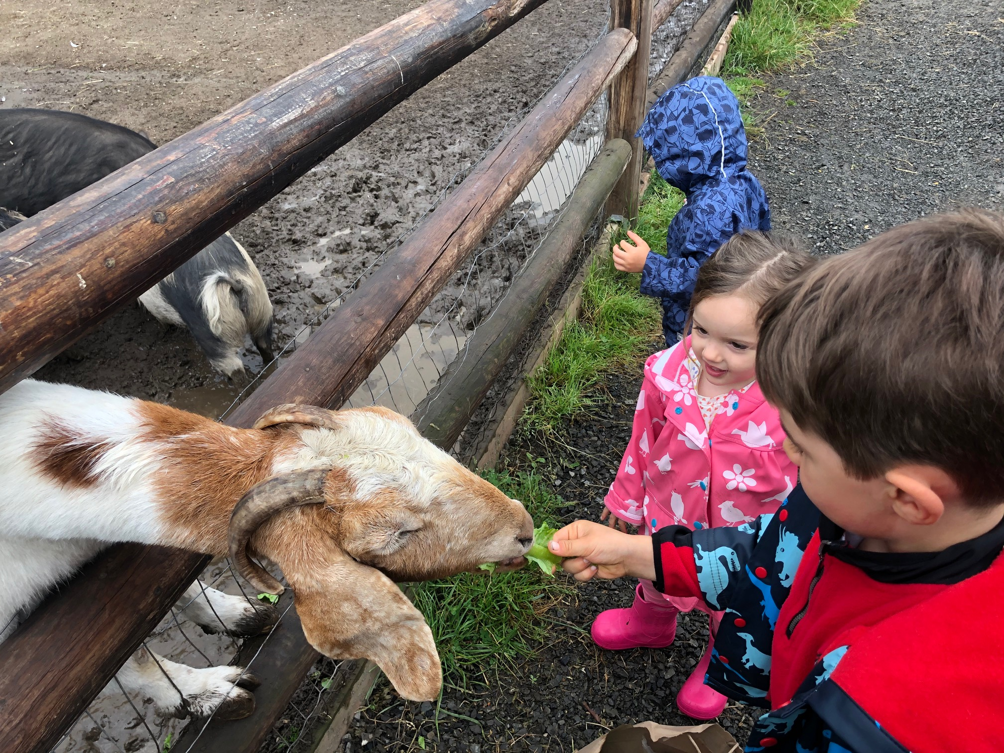 Sammamish Animal Sanctuary