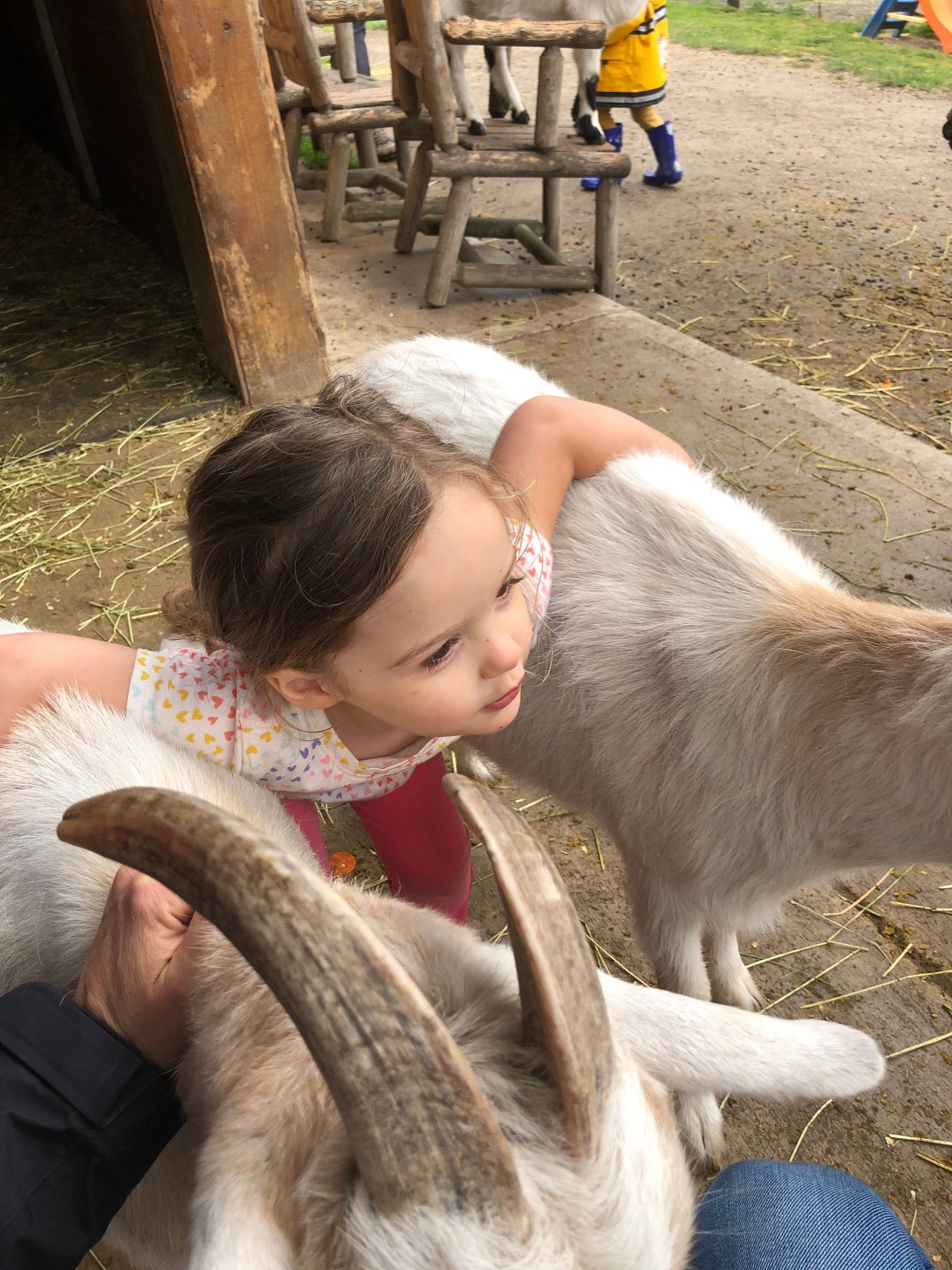 kids feeding animals